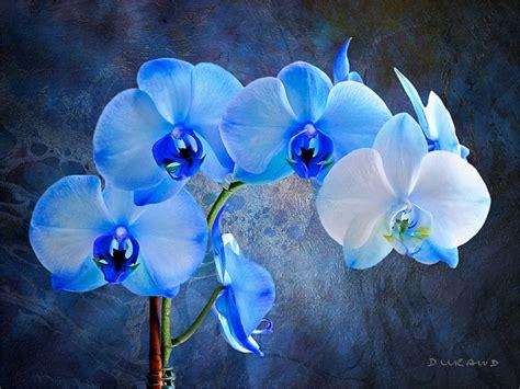 blue orchid boy images   usseek.com