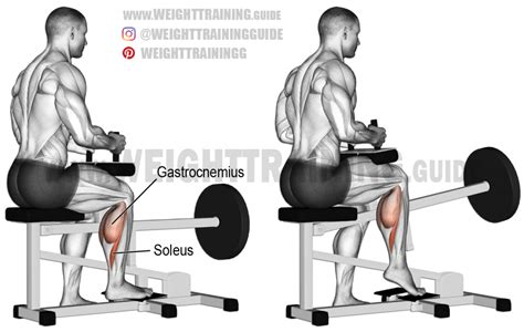 seated leg press exercise machine seated one leg calf raise exercise