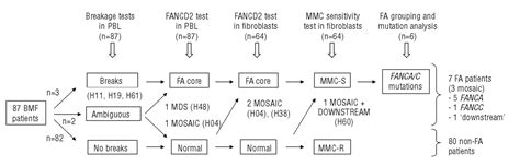 diagnosing anemia flowchart diagnosis of fanconi anemia in patients with bone marrow