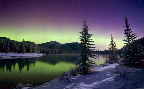 northern lights trees beautiful northern lights mountains trees sky