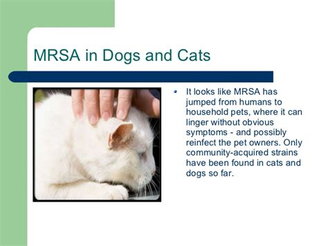 mrsa in dogs mrsa ppt