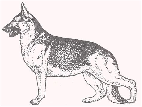 german shepherd to color printables pictures to pin on
