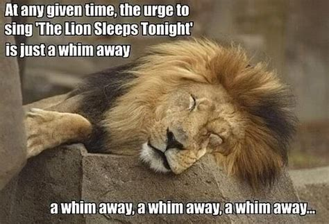 Lion Sex Meme - funny sleeping lion funny pictures quotes memes jokes
