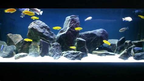 Mbuna Aquascape by Cichlid Mbuna Tank In Hd