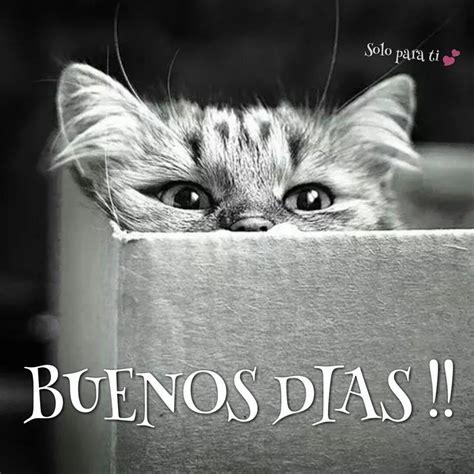 imagenes de buenos dias amor con gatitos 46 im 225 genes etiquetadas con gato im 225 genes cool