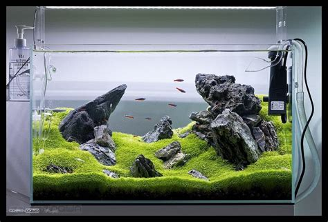 ada aquascape beautiful aquarium ada 60 p in greenaquashop photo by