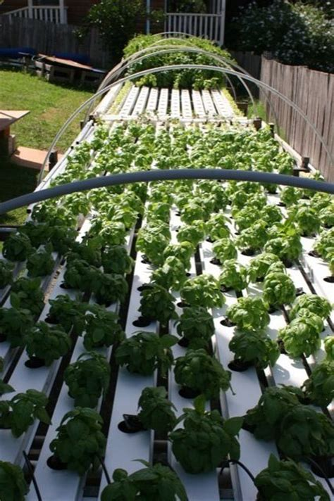 backyard hydroponics important things to feel about in