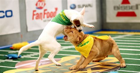 puppy bowl 2017 date and time puppy bowl 2016 brings ruff touchdowns kisses and yellow flags us weekly