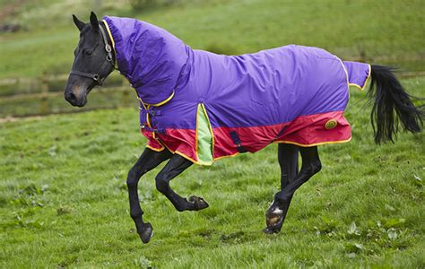 rugs for horses for sale colourful rug will brighten winter days hound