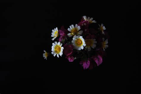 wallpaper vas bunga gambar mekar menanam putih ungu daun bunga musim