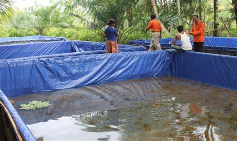 Tempat Jual Bibit Lobster Air Tawar teknik pembesaran ikan lele