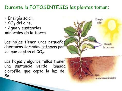 fotosintesis de las plantas procesos vitales en plantas y animales con audio