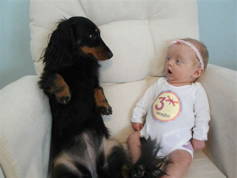 best dogs for babies 7 best dogs for homes with babies which breeds are best with babies