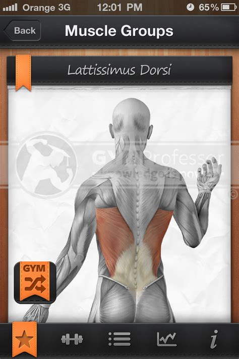 lat dorsi workouts most popular workout programs