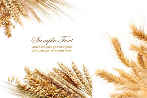 powerpoint templates free download grass wheat psd over millions vectors stock photos hd