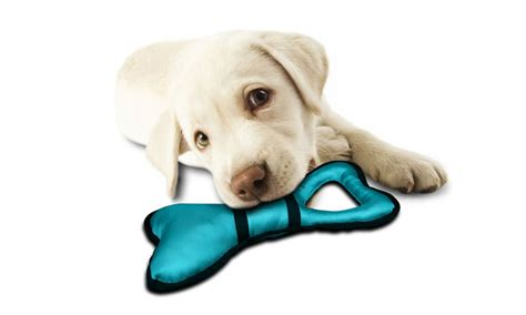 chew proof toys chew resistant 3 pack groupon goods