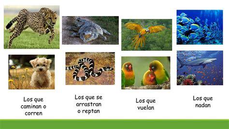 imagenes animales que reptan los animales profesoras carolina p 233 rez pamela z 250 241 iga