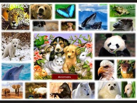imagenes reino animal los reinos presentes en la naturaleza reino animalia