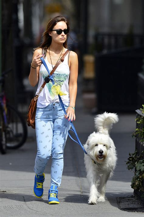olivia wilde coffee run with paco 04 view image dog walker star pics april 11 2013 zimbio