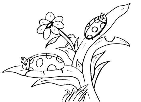 Lady Bug Coloring Pages Barriee Flower Coloring Pages For 10 And Up Printable