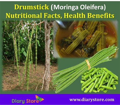 Drumsticks For Health by Drumsticks Health Benefits Nutritional Facts Moringa