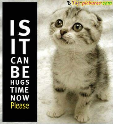 Cat Hug Meme - cute cat quotes bing images okay cats are perf omf yess