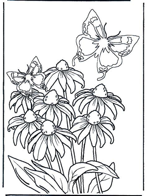 disegni farfalle e fiori fiore e farfalle fiori