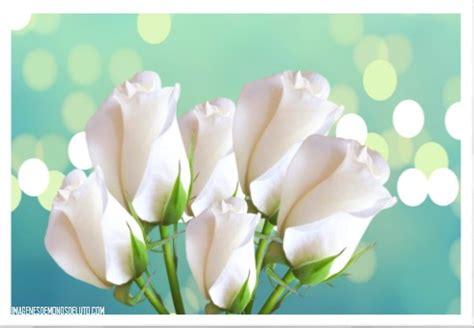 imagenes de luto rosas blancas imagenes rosas blancas hermosas