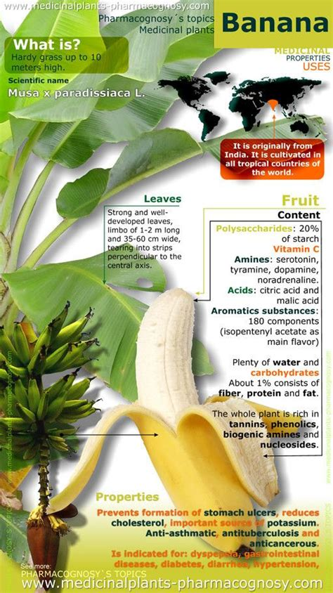 notes on a banana a memoir of food and manic depression books best 25 banana benefits ideas on banana