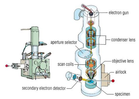 diagram of electron microscope scanning electron microscope diagram scanning free