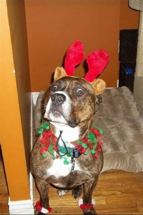 Christmas Dog Meme - meme template search imgflip