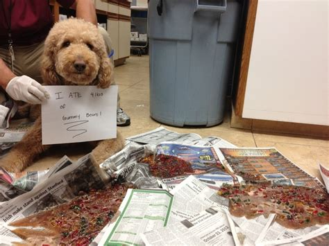 can dogs eat gummy bears 134 best shaming images on beautiful and best friends