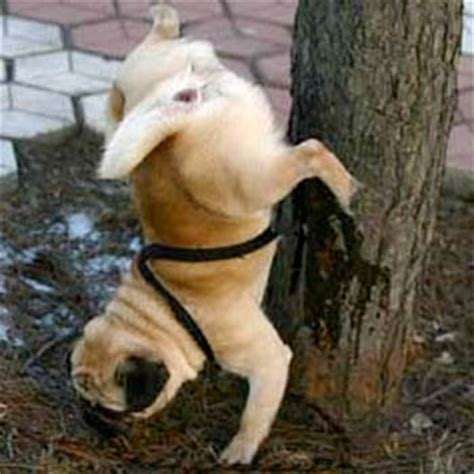 what to do with an older dog peeing in house wikileaks the cat s blog