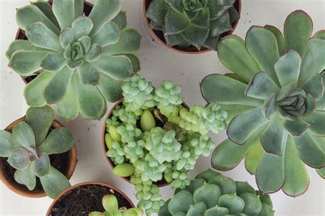 Sukkulenten Vermehren Mit Blattstecklingen Einfache Anleitung