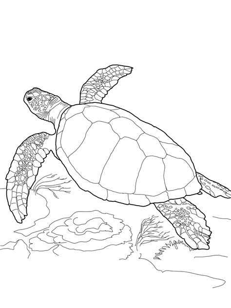turtle coloring page realistic turtle coloring pages