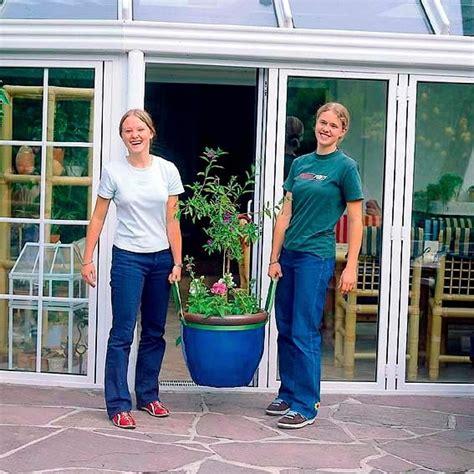 Bambusarten F R K Bel 1591 by Bambusarten F 252 R K 252 Bel Bambuspflanzen Als K Belpflanze F R
