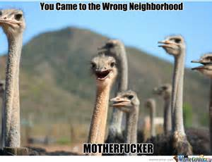 Ostrich Memes - wrong neighborhood ostrich edition by picyu91 meme
