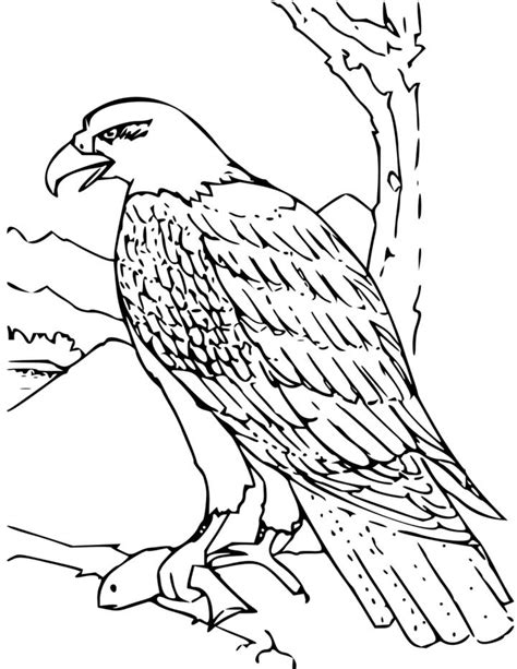 bald eagle coloring page for kids free printable picture
