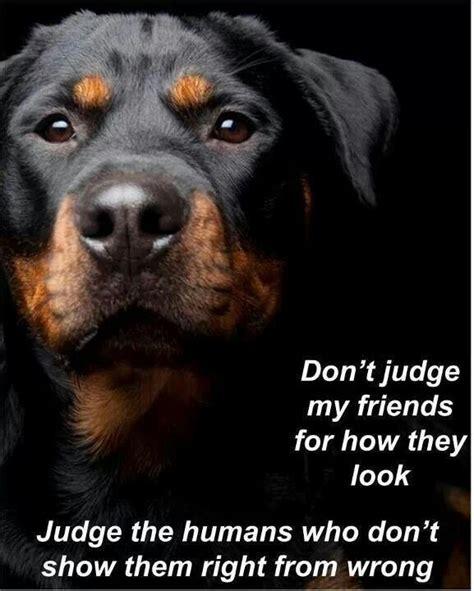 rottweiler jokes 25 best rottweiler quotes on pet quotes labrador quotes and rottweilers