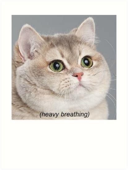 Cat Heavy Breathing Meme - cate meme heavy breathing www pixshark com images