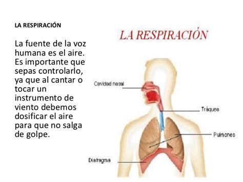 la respiracin el 8487403840 tipos de respiraci 243 n