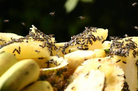 flies on food how to