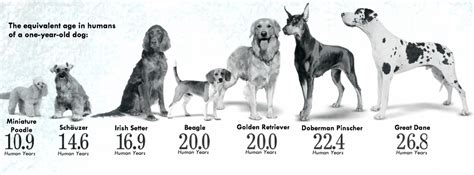 average age of dogs the mythology of years