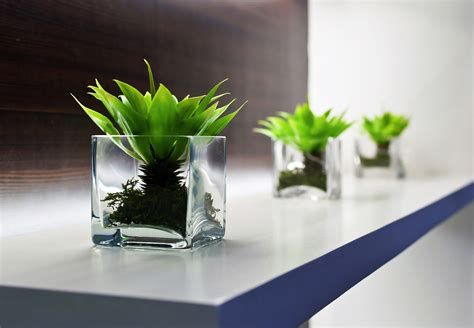 Office Desk Plants by 8 Benefits Of Plants In The Office