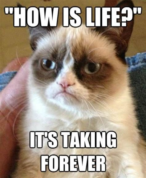 Popular Cat Memes - grumpy cat popular meme