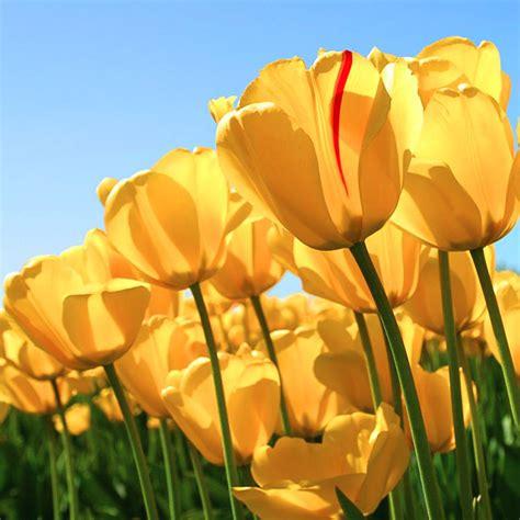 ricerca sui fiori frasi sui fiori