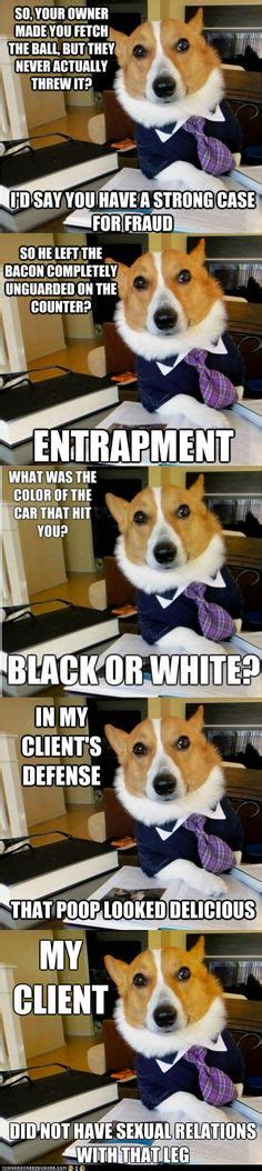 Corgi Lawyer Meme - hilarious lawyer dog memes you need to see attorney client
