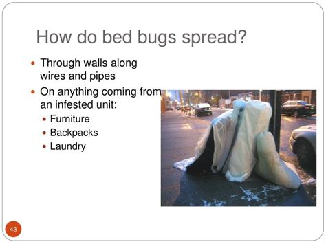 how bed bugs spread how do bed bugs spread bedding sets