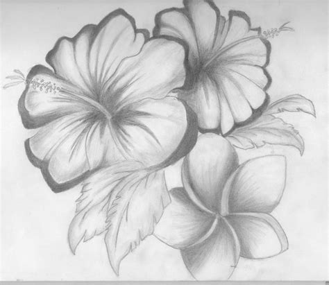 Beautiful Bedrooms Ideas gallery simple pencil drawing of flower drawing art