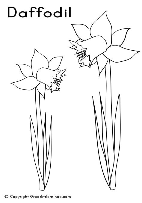 Daffodil Colouring Sheet Daffodil Coloring Page